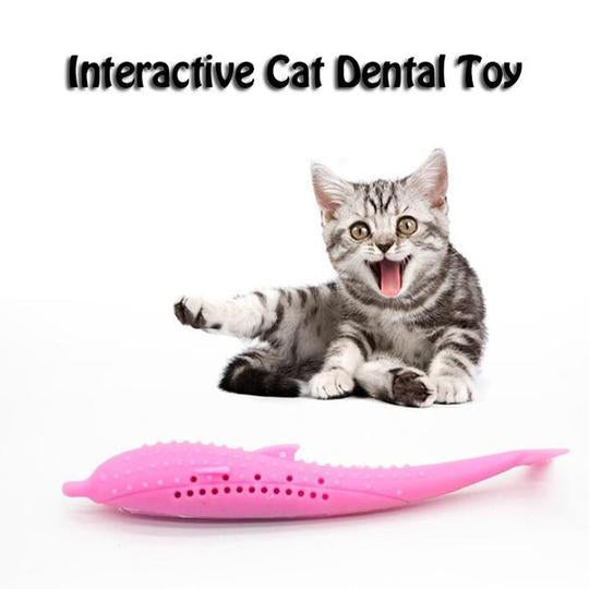 Prevent tartar and plaque buildup on cat teeth