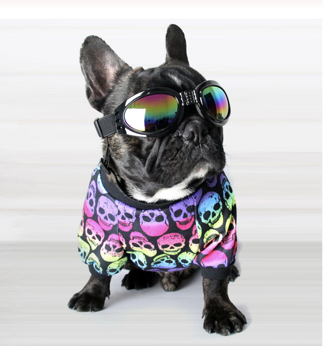 Skull Pattern - Shirt for Frenchie