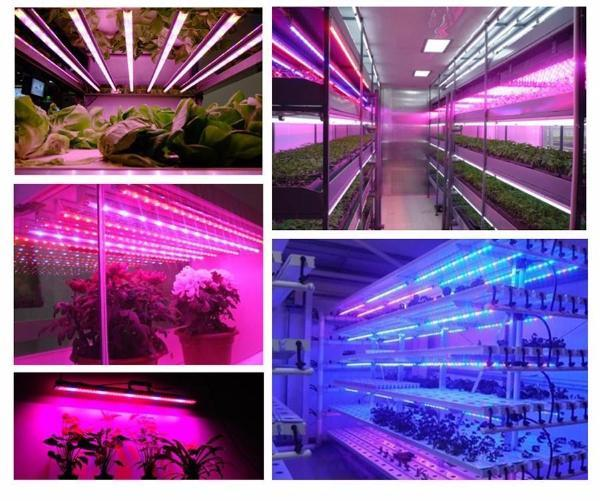 Plant Flourishing LED Light