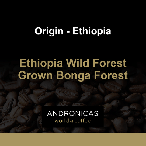 Ethiopia Wild Forest Grown Bonga Forest