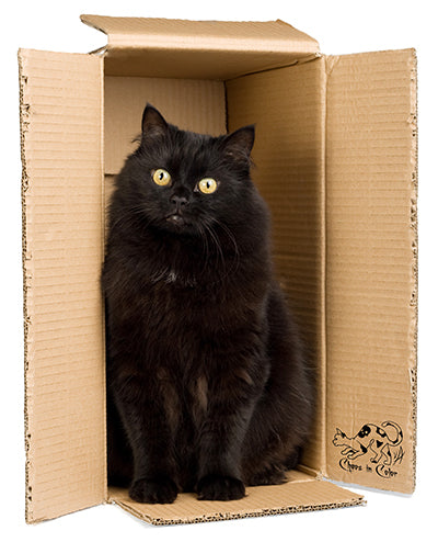 Black Cat in Chaos in Color Shipping Box