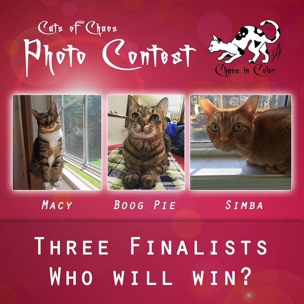 Cats of Chaos Photo Contest - Three Finalists - Who will win?