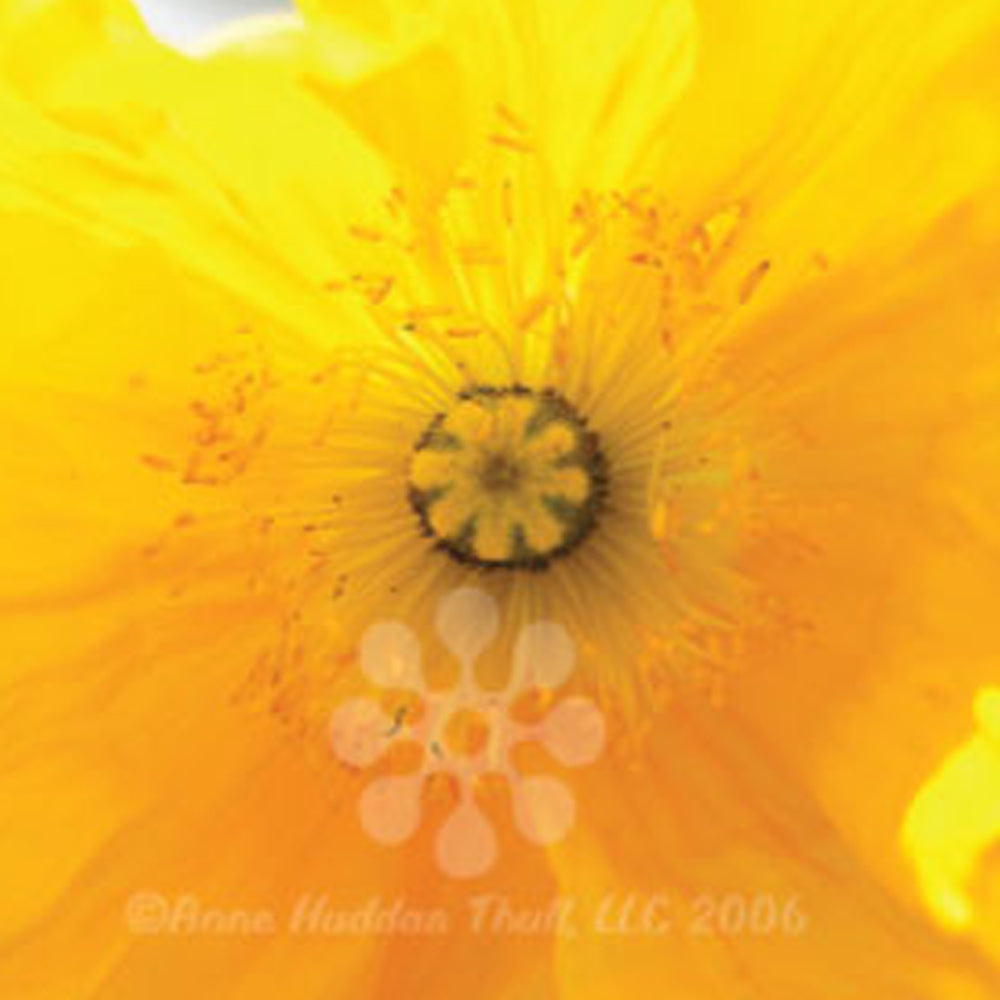 Yellow Poppy Gardens | Until We Meet Again: fine art greeting cards, blank greeting cards, greeting cards with color pictures.