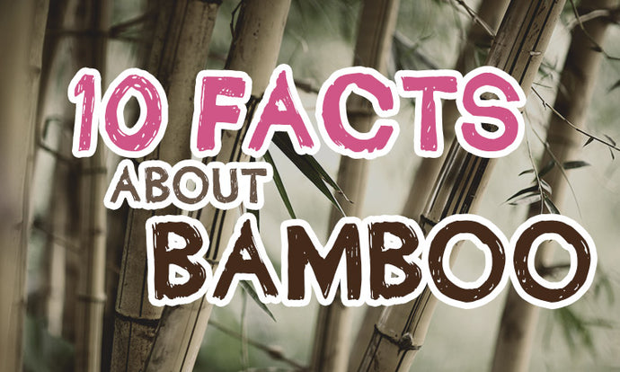 Top 10 facts about Bamboo