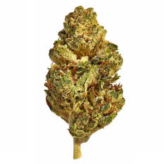 Dried Cannabis - AB - Canaca Mango Flower - Grams: - Canaca