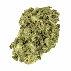 Dried Cannabis - Havenstreet Warlock CBD Flower - Format: - Havenstreet