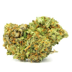 Dried Cannabis - Aurora Chocolope Flower - Format: - Aurora