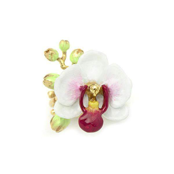 Phalaenopsis White Ring