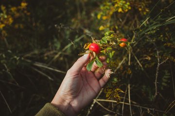 Four Things to Forage Now: A Guide to Harvesting Autumn's Hedgerows