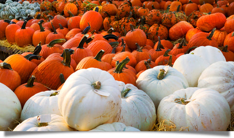 Pumpkins and the power of storytelling