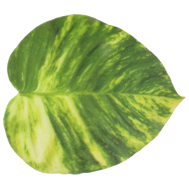 Pothos Vine Leaf Foam Coaster - TropicaZona
