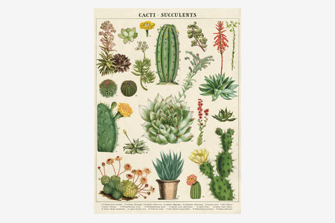 Cavallini Gift Wrap - Cacti and Succulents