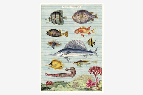 Cavallini Gift Wrap - Tropical Fish