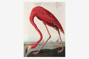 IXXI Wall Art - Flamingo - 120x160cm