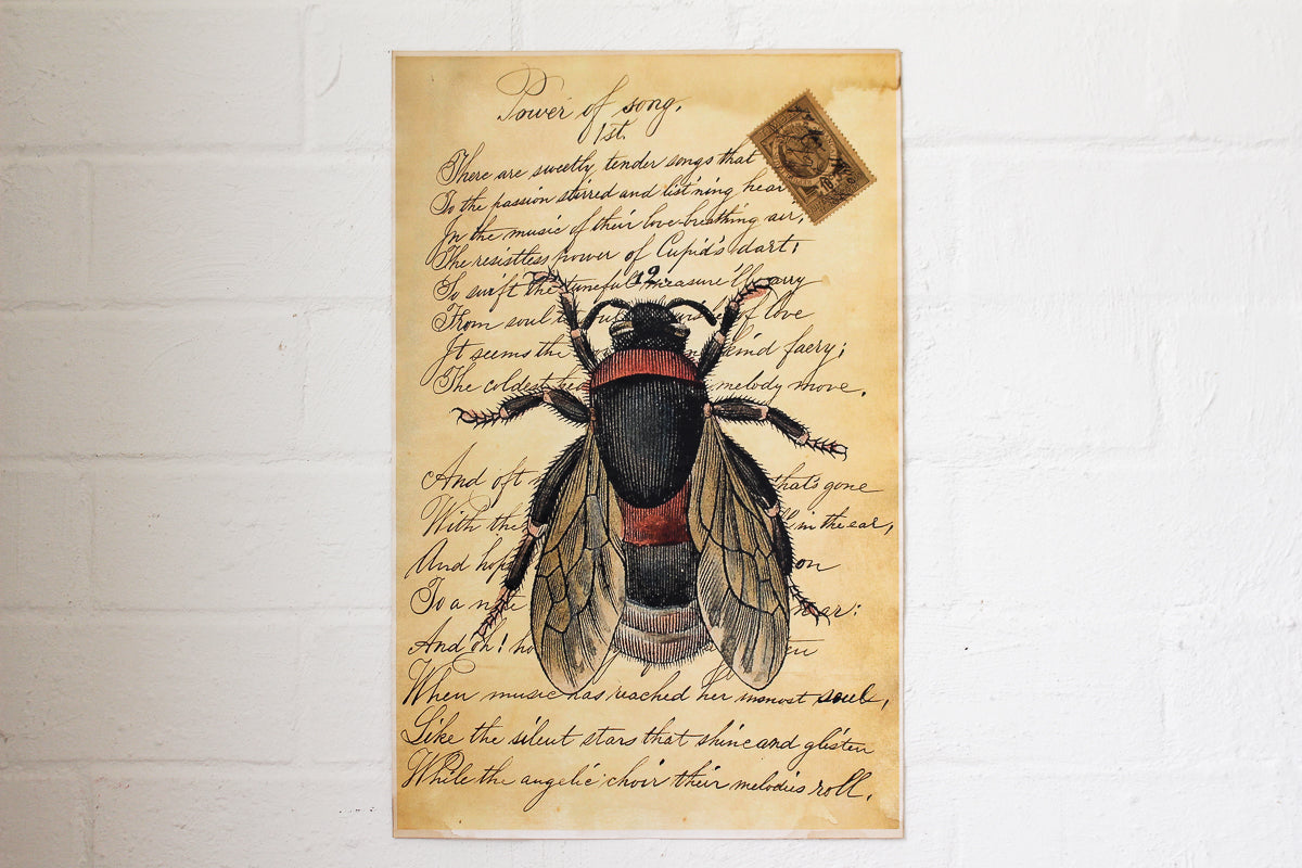 Monahan Poster - Bumble Bee