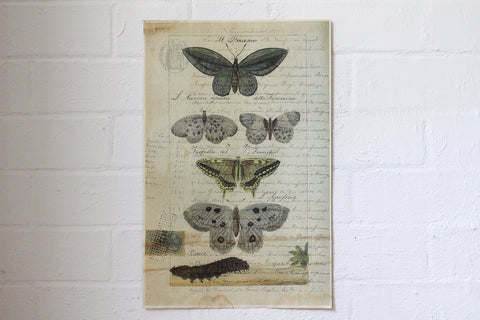 Monahan Poster - Butterflies with Caterpillar