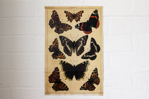Monahan Poster - Orange & Black Butterflies