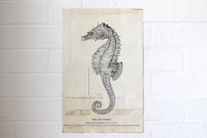 Monahan Poster - Seahorse