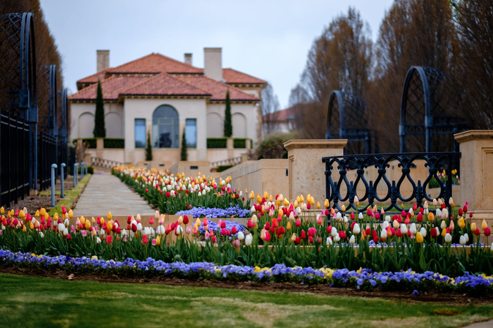 Grand Entrance Tulip Collection