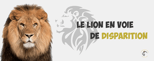 Le Lion en Voie de Disparition