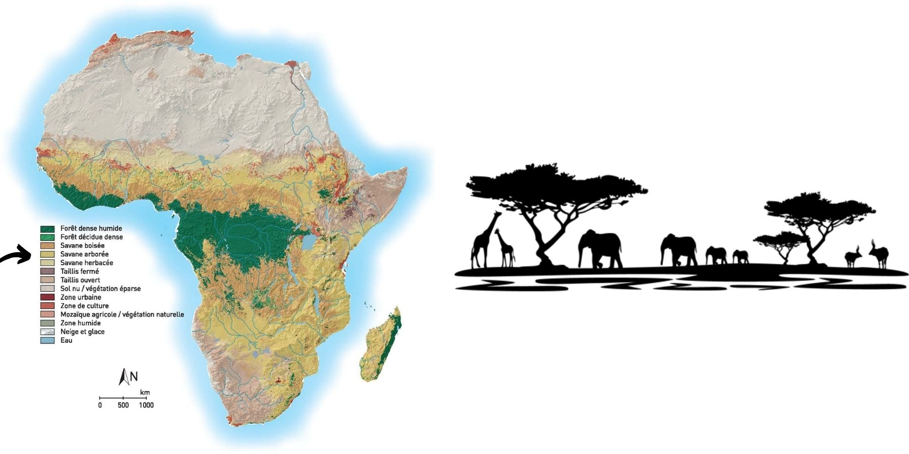 carte savane africaine