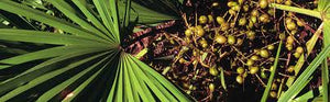 5 Health Benefits of Saw Palmetto