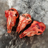 Splattered Lamb Skulls