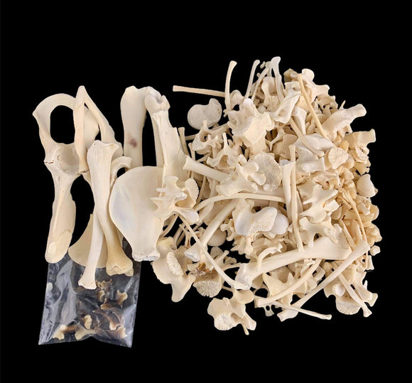 Porcupine Bone Bag - Large