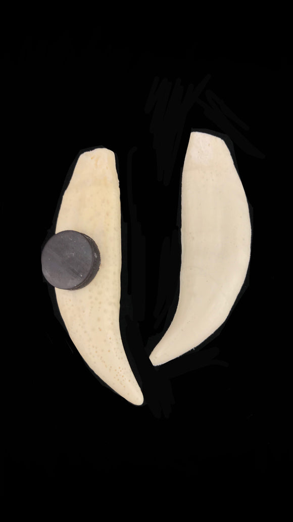 Replica Grizzly Bear Tooth Magnet