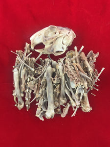 Rabbit Skeleton Disarticulated