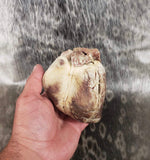 Single Pig Heart - Wet Specimen