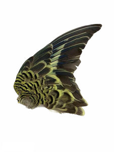 Taxidermy Canary Wings