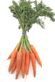 Carrot - Dutch