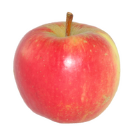 Apple - Elstar