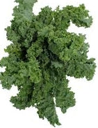 Kale- Curly Green