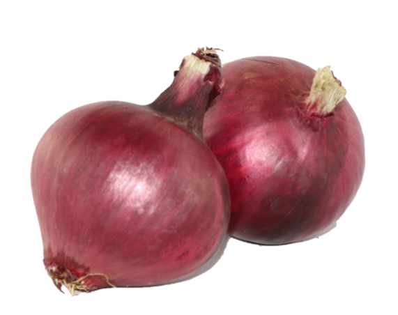 Onion - Red (med size)