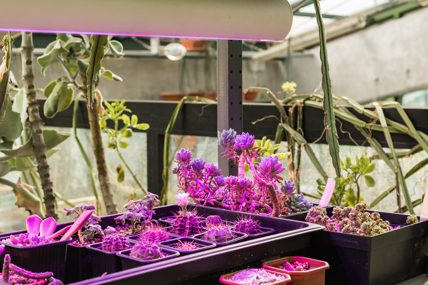 Indoor Grow Lights - How They Work