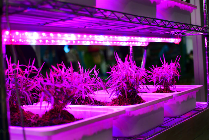 Using LED Grow Lights To Grow Plants Indoors