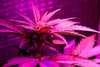 The Benefits Of Using LED Grow Lights
