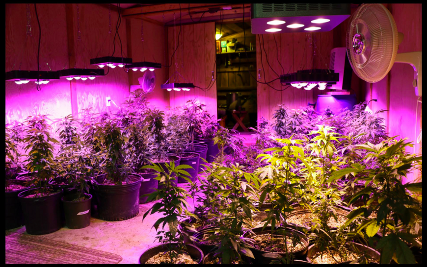 How to use LED Grow Lights?