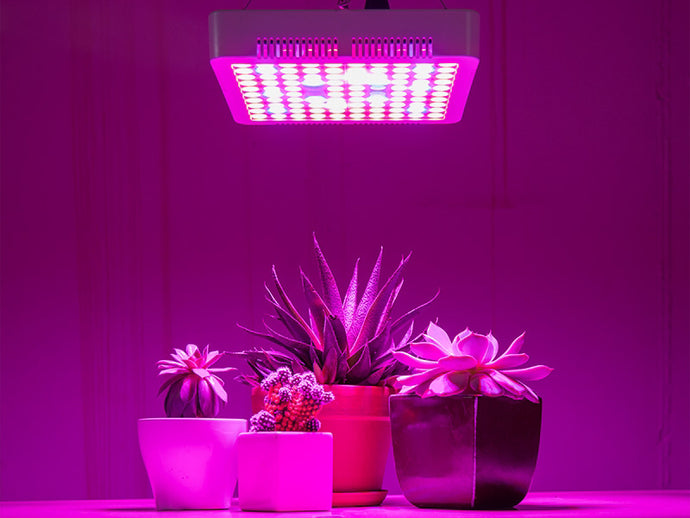 Why Choose LED Grow Lights - Fluorescent vs LED Grow Lights