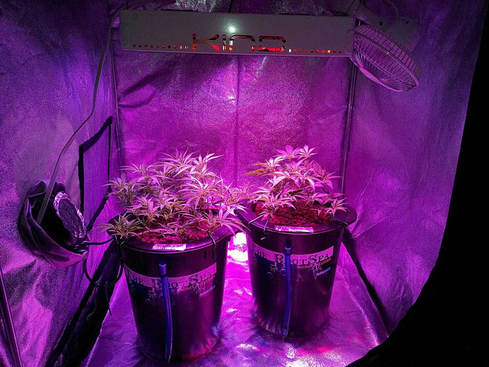 What Are The Benefits Of LED Grow Lights?