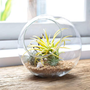 ECO Farm Round Glass DIY Air Plants Terraria