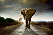 Load image into Gallery viewer, Walking Elephant Wall Mural