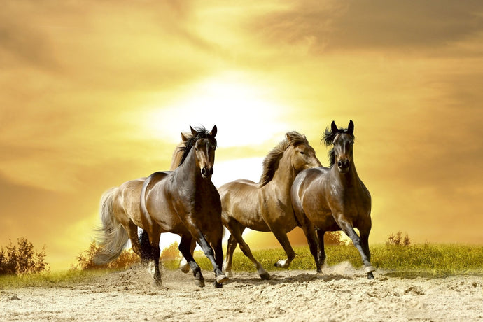 Horses in Sunset Wall Mural