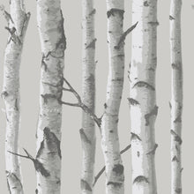 Load image into Gallery viewer, Mountain Birch Grey Peel & Stick Wallpaper