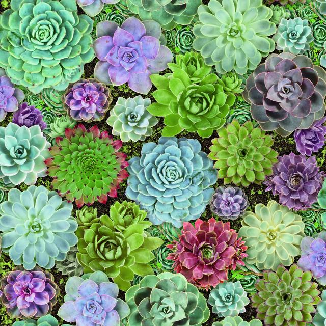 SUCCULENTS PEEL & STICK WALLPAPER