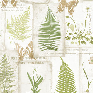wallpaper, wallpapers, botanical, leaves, flowers, butterflies, script, ferns