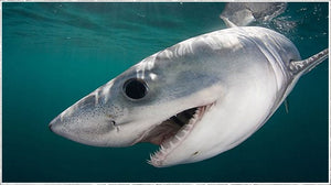 It's shark week - 5 fun facts about our ocean dwelling buddies!