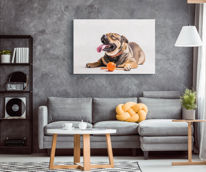 Bulldog Canvas Wall Art
